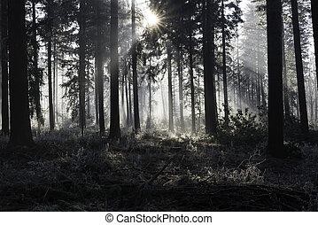 sonnenstrahlen, winterlandschaft