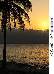 sonnenuntergang, an, a, tropischer strand