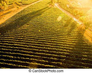 sonnenuntergang, aus, chilenisch, vineyard., landschaft., luftblick