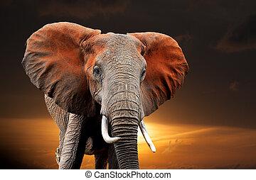 sonnenuntergang, elefant