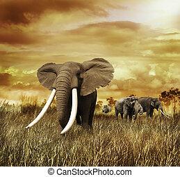 sonnenuntergang, elefanten