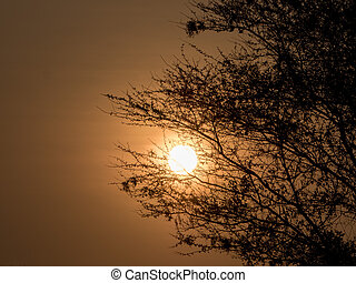 sonnenuntergang, in, afrikas