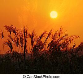 sonnenuntergang, landschaftsbild, von, yangshuo, in, guilin