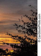 sonnenuntergang, mit, gelber himmel, und, schwarz, bäume