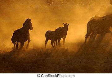 sonnenuntergang, namibia, okaukeujo