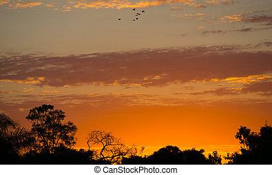 sonnenuntergang, pantanal