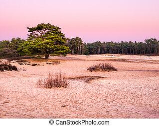 sonnenuntergang, sand, heathland, natur, goois, niederlande...