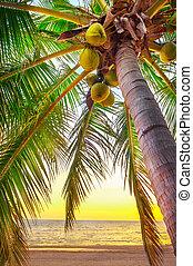 sonnenuntergang- strand, karibisches meer
