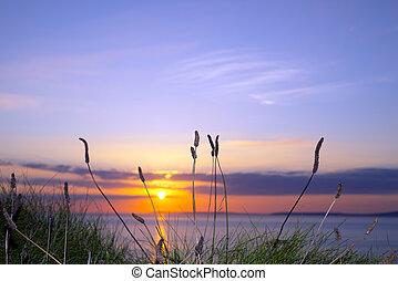 sonnenuntergang, weg, wild, großes gras, atlantisch