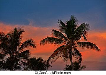 sonnenuntergangshimmel, kokospalme, bäume, in, karibisch