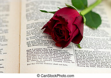 Sonnet 18 with red rose facing - William Shakespeare's...