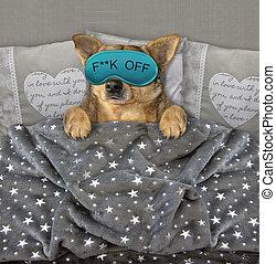 sonno, 3, maschera, cane, letto