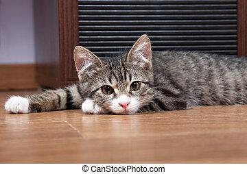 sonolento, gatinho