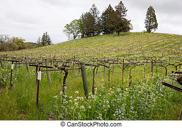 sonoma, primavera, california, cantina, durante, valle