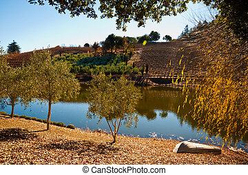 Sonoma vineyard - Vineyard and pond in Sonoma CA