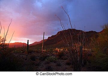 Sonora Desert at Sunset - Sonora desert at sunset near ...
