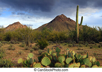Sonora Desert landscape near Tucson Arizona