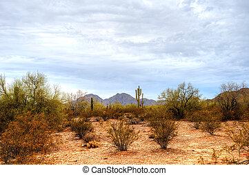 Summer Sonora desert in central Arizona USA