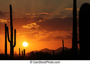 Sonora Desert Sunset - Saguaro cactus silhouette by an...