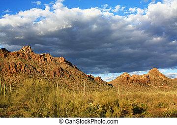 Sonora Desert Tucson AZ