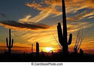 Sonora Sunset - Sonora Desert Sunset Near Tucson Arizona