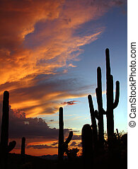 Sonoran Desert sunset - Sonoran Desert  Tucson Mountain Park