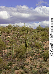 Sonoran Landscape - Clouds coming in over the arid landscape...