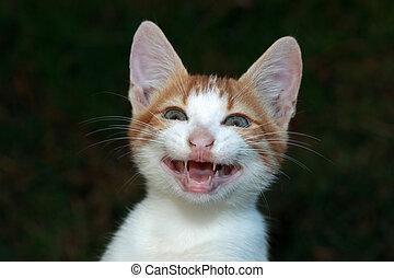 sonriente, gato