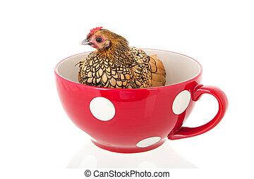 sopa, pollo