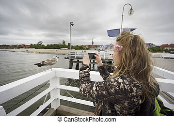Sopot Poland, on the fence of a seagull,