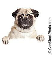 sopra, billboard., sopra, cane pug, o, fondo, vuoto, bianco, bandiera, segno., occhiali