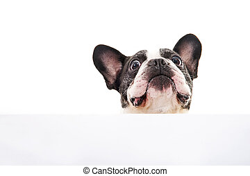 sopra, cane, luminoso, fondo, bianco, scheda