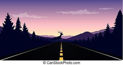 sopra, fauna, alce, strada, paesaggio, pavimentato, salti