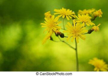 sopra, giallo, sfocato, sfondo verde, fiori