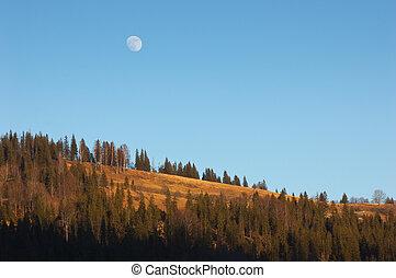 sopra, pieno, foresta, luna