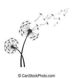 soprando, silueta, dandelion, voando, isolado, sementes, experiência preta, branca, vento