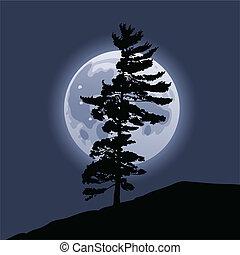 sorgere luna, pino