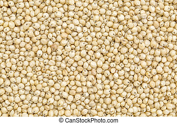 sorghum grain background - background and texture of gluten ...