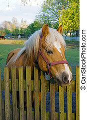Sorrel horse standing at a fence