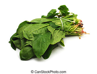 sorrel isolated