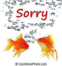 sorry concept with word and goldfish isolated on white ...