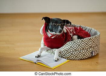 sort, duktig, room., hund, couch, mitt, hans, lögnaktig, ögon, tom