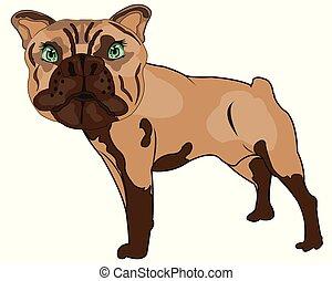 sorte, bouledogue, illustration, vecteur, animaux familiers, chiens