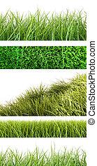 sortiment, i, forskellige, græs, på hvide