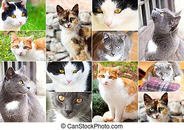 sortimento, de, gatos