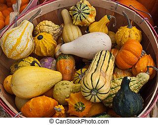 sortimento, de, outono, squash, em, um, cesta alqueire