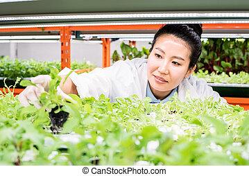 sorts, 新しい, 温室, 植物, メスのアジア人, 研究, 生物学者, 若い