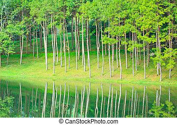 sosna las, wzdłuż, przedimek określony przed rzeczownikami,...