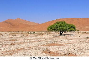 Sossusvlei sand dunes landscape in
