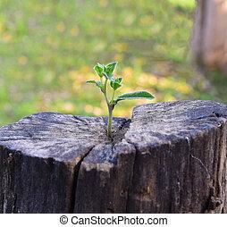 sostegno, albero, costruzione, crescente, forte, tronco, piantina, centro, future., concetto